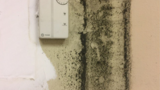 Police union cautioning Riviera Beach officers about mold in police station