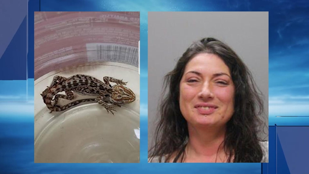 Police: Woman found with lizard in her bra faces DUI charges
