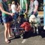 Mardi Gras Parade of Pups raises money for Humane Society