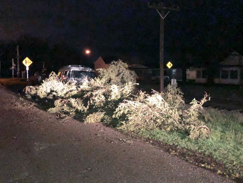 A tree lies on the side of a road in Point Pleasant. (WCHS/WVAH)
