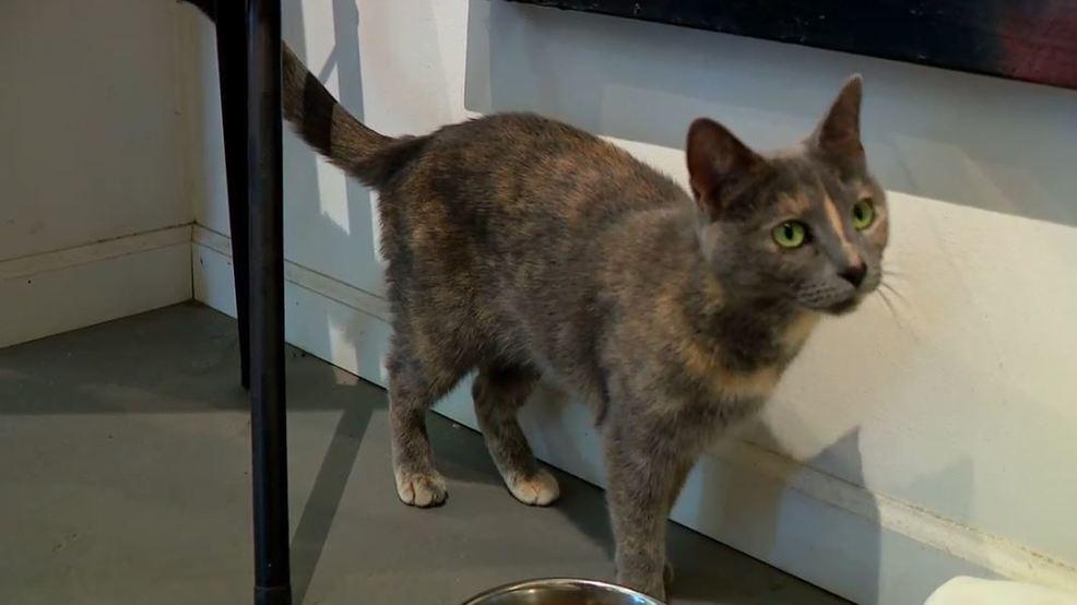 Pop-up cat cafe in the RAD benefits Asheville Humane