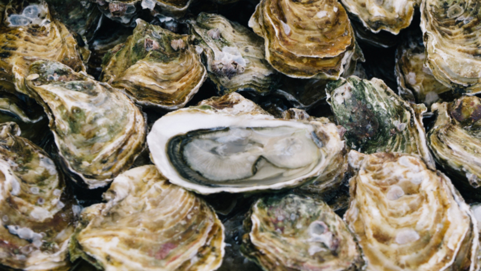 Judge: Federal shellfish permit doesn't protect environment