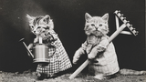 Photos: 100+ year old pictures showcase funny animal scenes