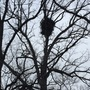 Bald Eagle nests soar to record number across Wisconsin
