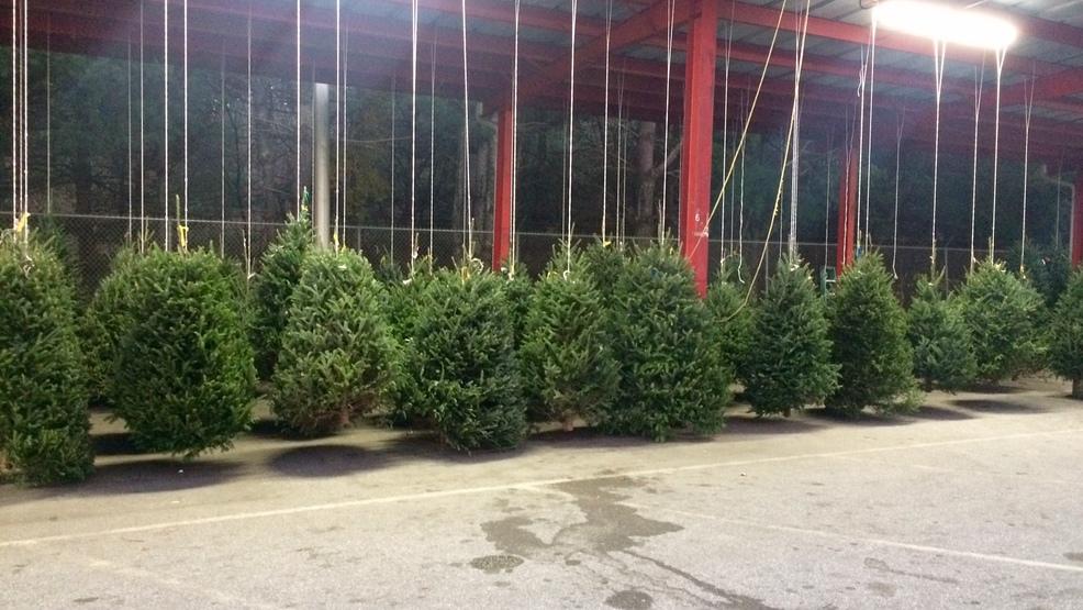 christmas tree supply and sales at wnc farmers market - Christmas Tree Farm Asheville Nc