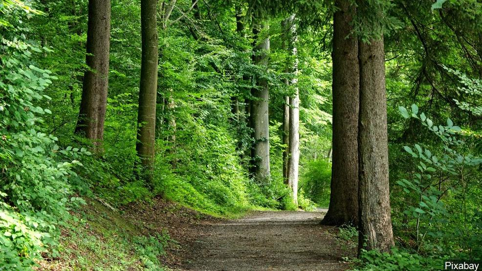 Gatlinburg Trail among best in nation for travelers according to TripAdvisor