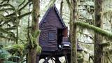 Discovery of 'gingerbread house' in Washington woods leads to child porn charges