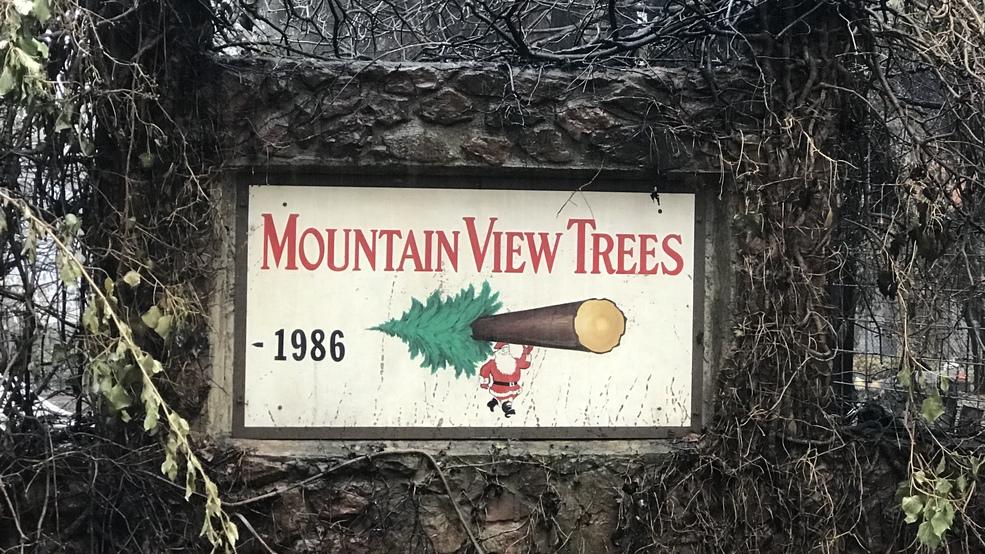 A Christmas Miracle Christmas Tree Farm In Paradise Still Flourishing