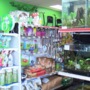 Chameleon stolen from pet store returned dead a week later