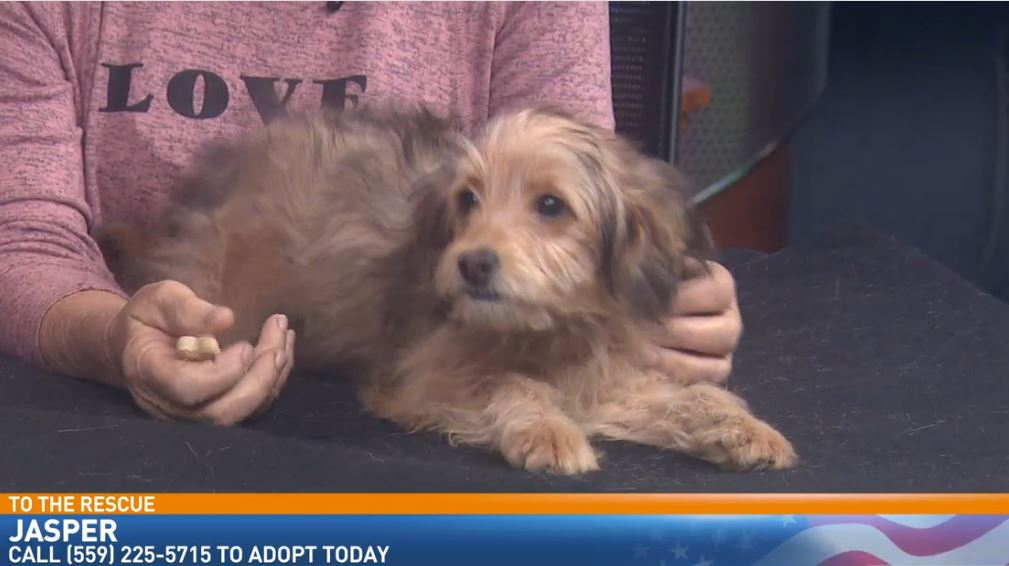 Linda Guthrie from Animal Rescue of Fresno (ARF) visited with a dog looking for a good home
