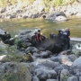 Wenatchee River rafting trip turns tragic when Bremerton man drowns